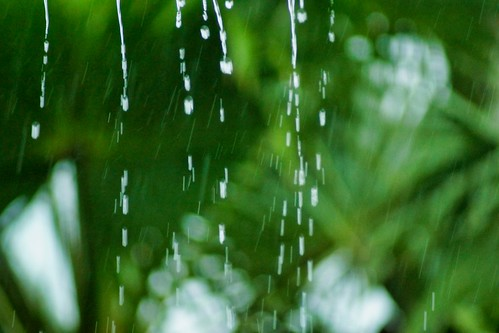 2019-01-17 - Nature Photography, Another day of Rain