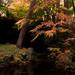 Autumn Tints of 2018 by PxK-5_12.jpg