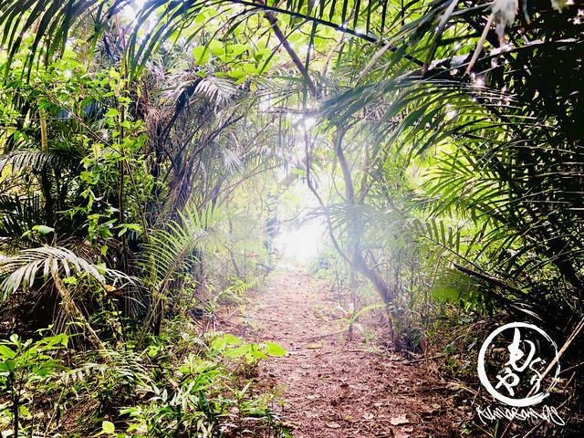 ジャングルを抜けると