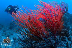 Scuba Diving in Boa Vista, Cabo Verde