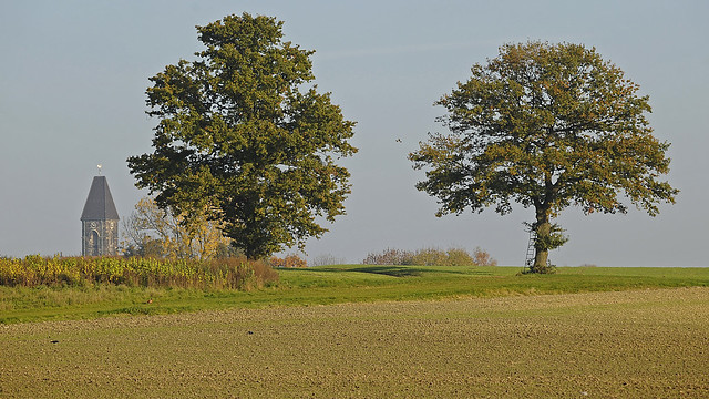 Two oak trees in, Nikon D700, Sigma 50-500mm F4-6.3 EX APO RF HSM