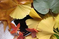 Abrumado por el otoño #InspiraciónBdF85