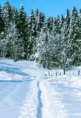snow-0806
