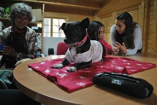 Terapia con perros 2017