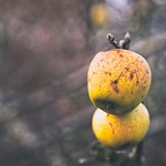 Garden apple bokeh - 30. Dezember 2018