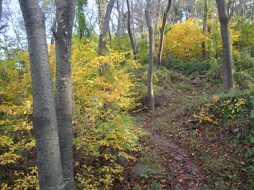 Wege im Herbst auf Yeongdo