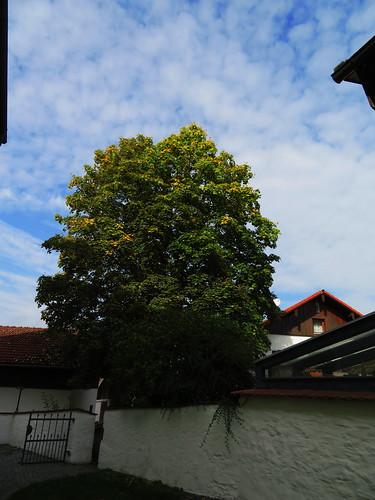 20170929 02 494 ostbay Rattenberg Häuser Herbst Baum