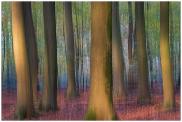 Forest of dancing trees in movement