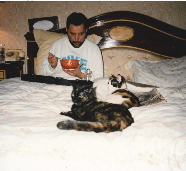 Фредди Меркьюри с кошкой фото