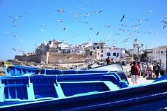 essaoira boats with gulls