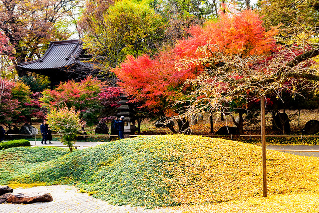 At Kuhonbutsu Joshinji Temple, Nikon D750, AF-S Nikkor 28mm f/1.8G