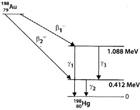 NCERT Solutions for Class 12 Physics Chapter 13 Nucle 42