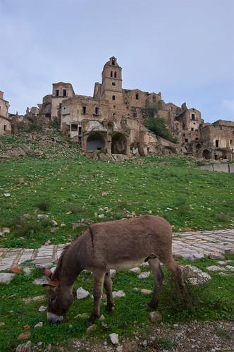 IMGP3448 Donkey in Craco