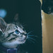 小隻ㄟ|Cats by 里卡豆
