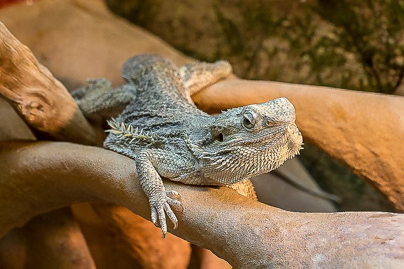 Fotos de animales de todo tipo incluyendo mascotas que más te gustan - Página 14 45458846695_c655d87608_b