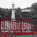 In Remembrance Poppies at Roath Park