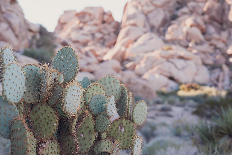 09joshuatree-travel-outdoor-cactus