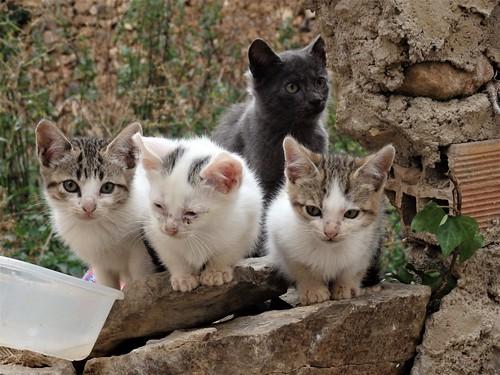 Gatos...los Tres Mosqueteros y D`Artagnan.