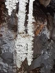 Grotte de Clamouse_155207 - Photo of Pouzols