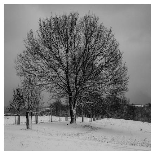 Ein bisschen Winter.