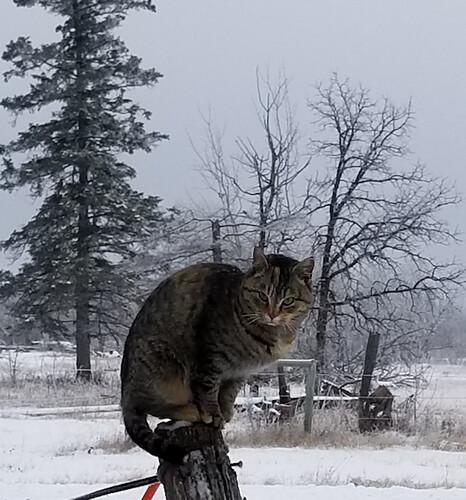 20181201.postcat