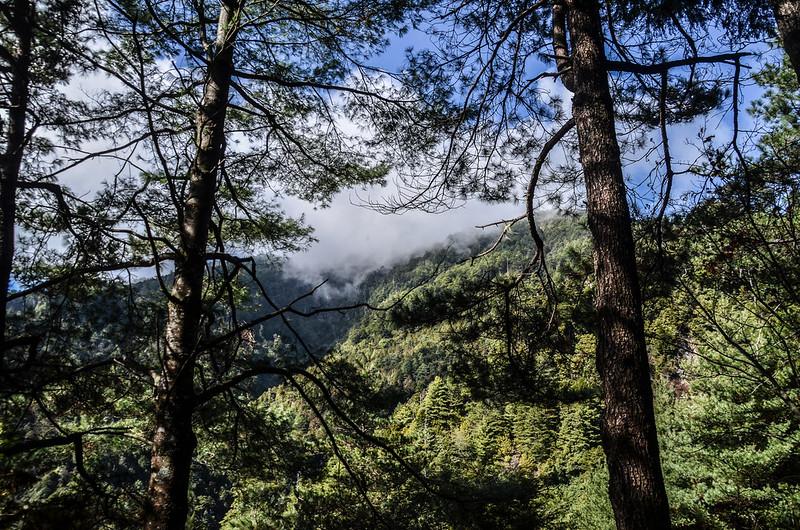 200林道山景 (2)