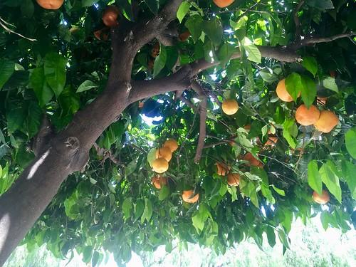 2018.06.18 - oranges