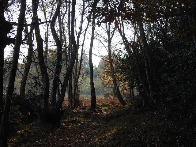 Central Bog,Kinson Common