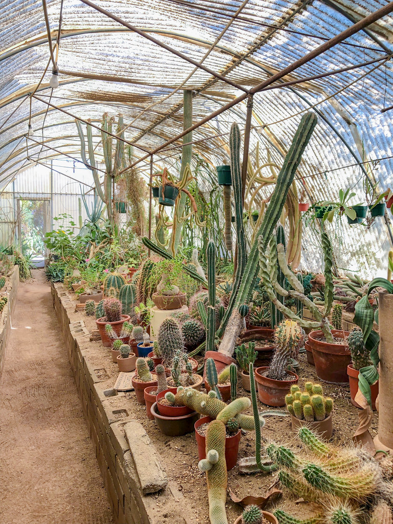 In the cactarium
