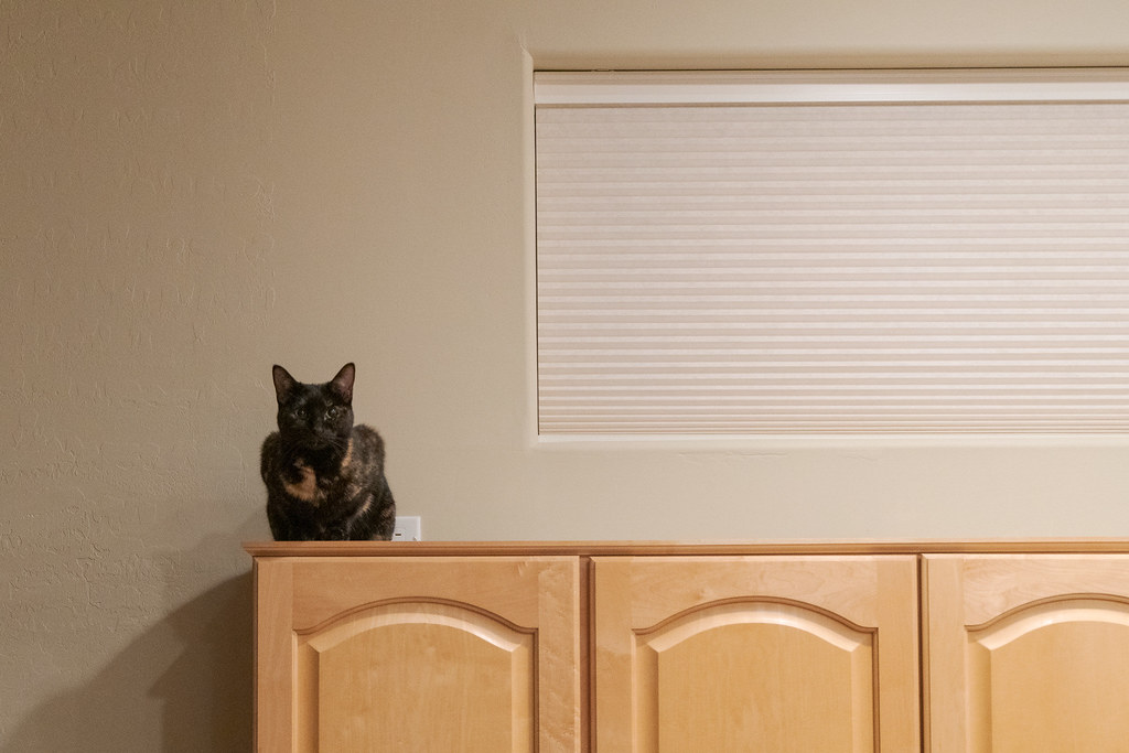 Our cat Trixie looks out from the top of the kitchen cabinets on her first day in our new house in Scottsdale, Arizona