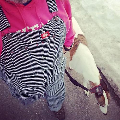Walkin' #Cane #dogsofinstagram #greyhound #greyhoundsofinstagram #overalls #dungarees #biboveralls #dickiesworkwear #hickorystripe #denimoveralls #overallsarelife