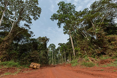 Deforestation and landscape fragmentation, Cameroon
