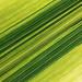Natural stripes by wolfgang.kynast