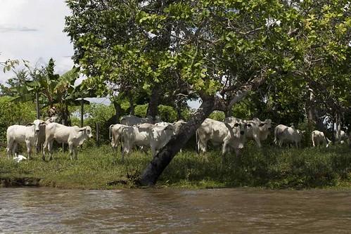 Amazônia S.A.