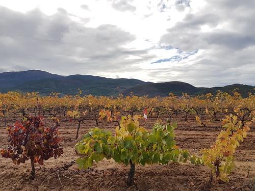 Autumnal Vines Spain Andalusia © Weinbau im Herbst Spanien Andalusien Sierra Nevada Alpujarras Almerienses  © Andalucía La Alpujarra Almeriense ©