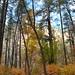 Autumn Oak Creek Canyon 2