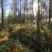 wooded - Woodbury Common (HDR), Devon - Oct 2018