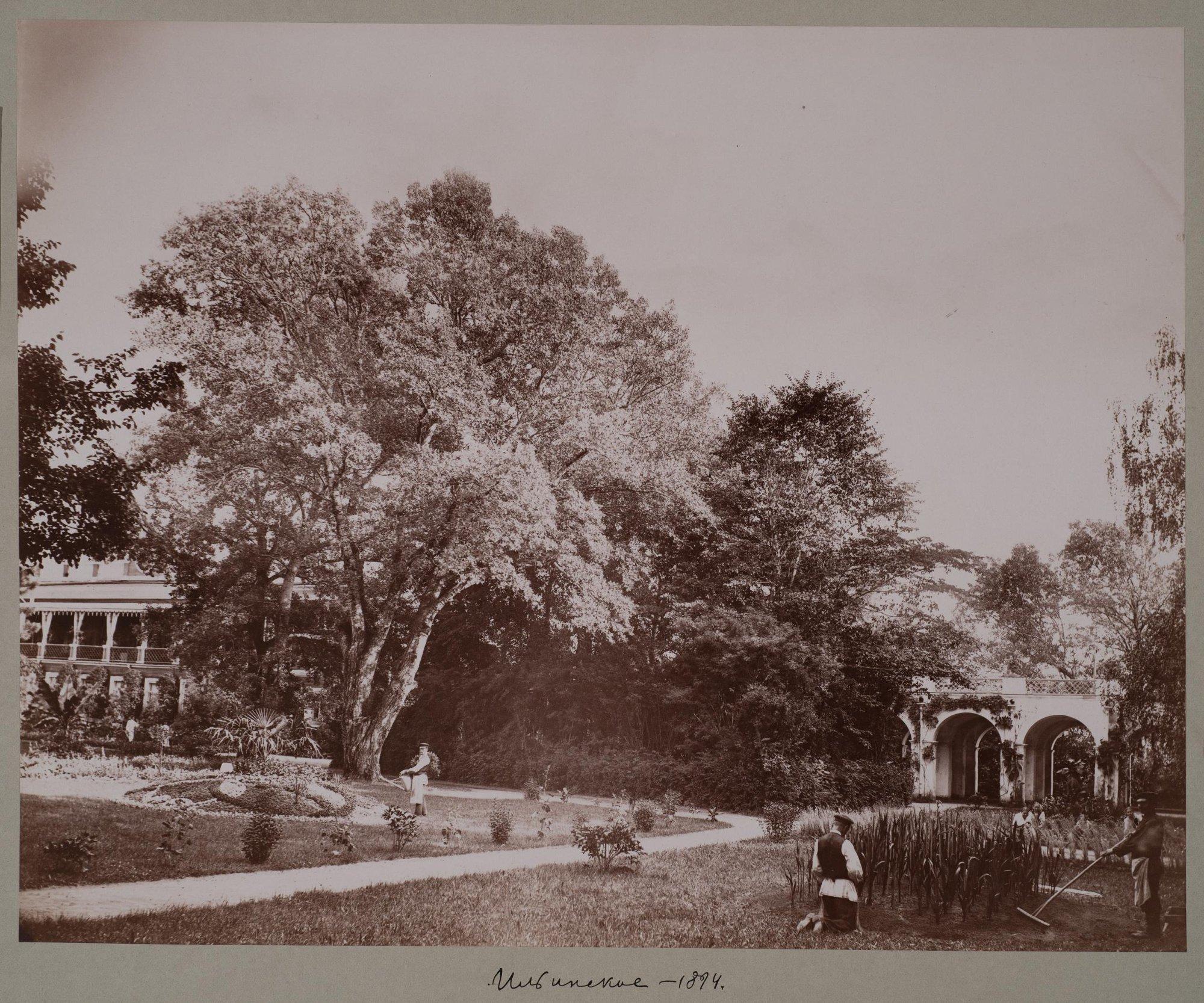 1894. Вид дома и парка в Ильинском
