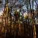 Hampshire in Autumn-21