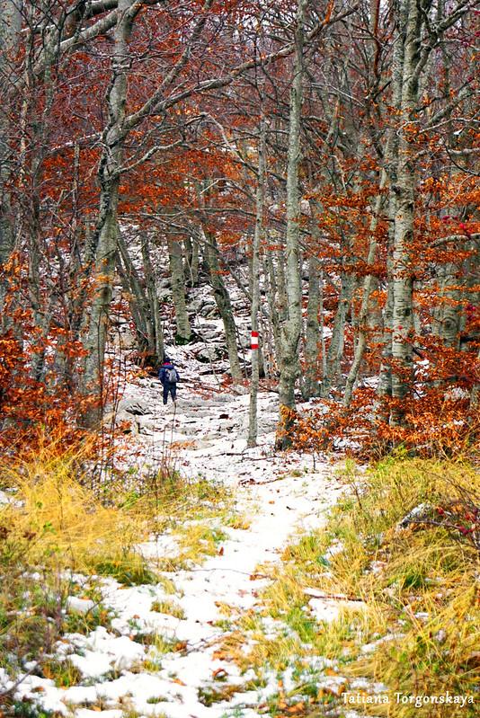 Дорожка, ведущая в буковый лес