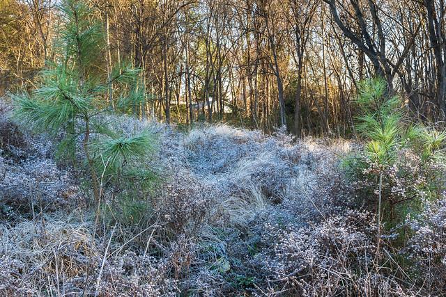 Frosty Pathway, Nikon D3300, AF-S DX Nikkor 35mm f/1.8G