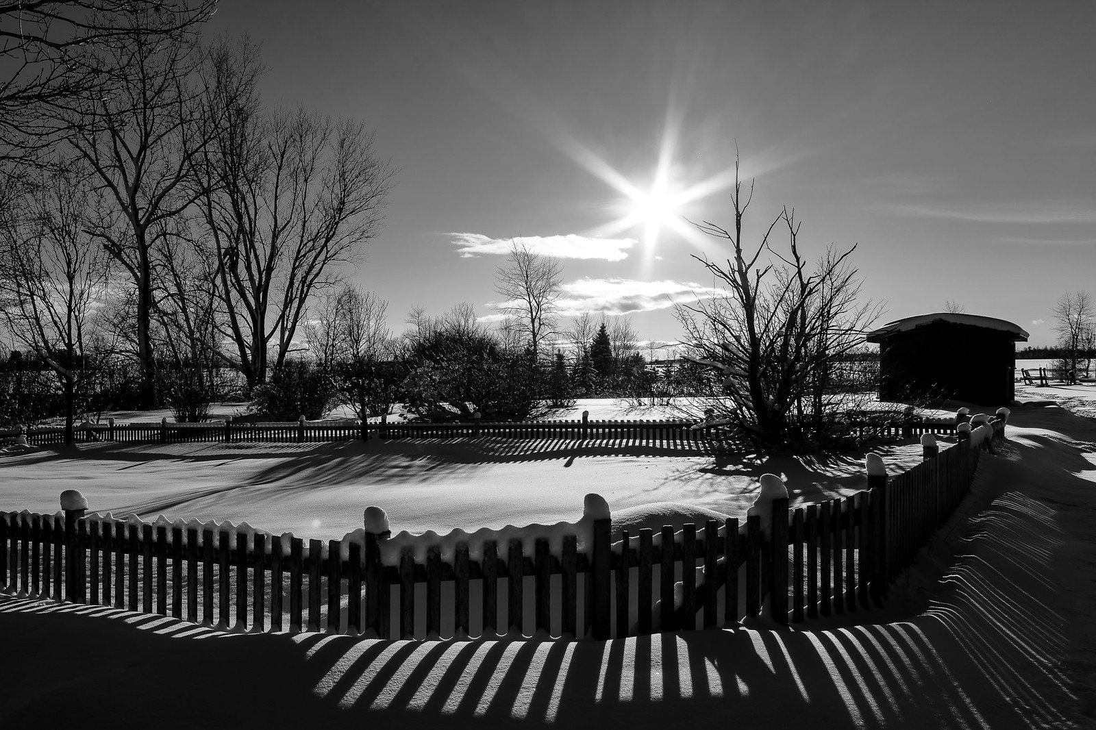 L'hiver en noir et blanc... 46228472321_e53f1533cf_h