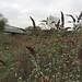 Field beside Ascot Road