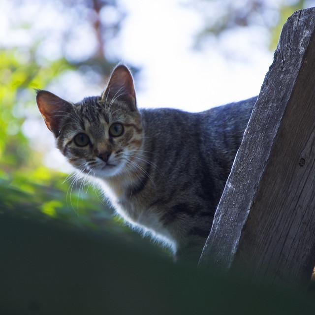 Кошкин взгляд.
