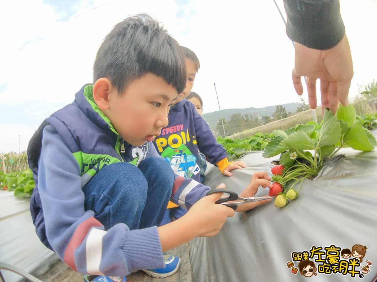 大岡山觀光草莓園-8