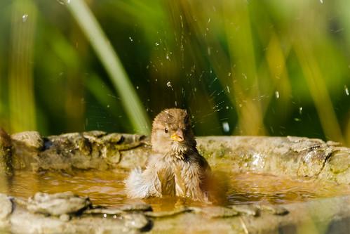 bathing!