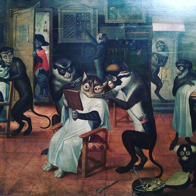 Monos y gatos