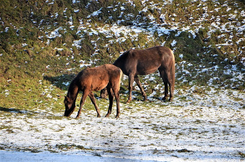 Horses 19.01 (4)