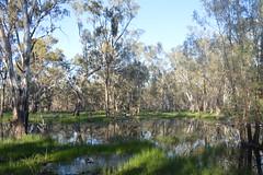 Murumbidgee Wetlands