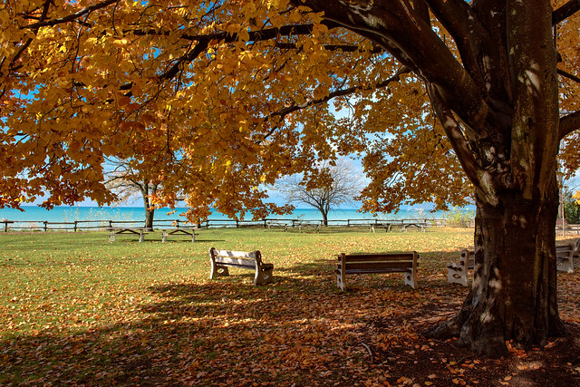 Pioneer Park: Fall Beech Shadows
